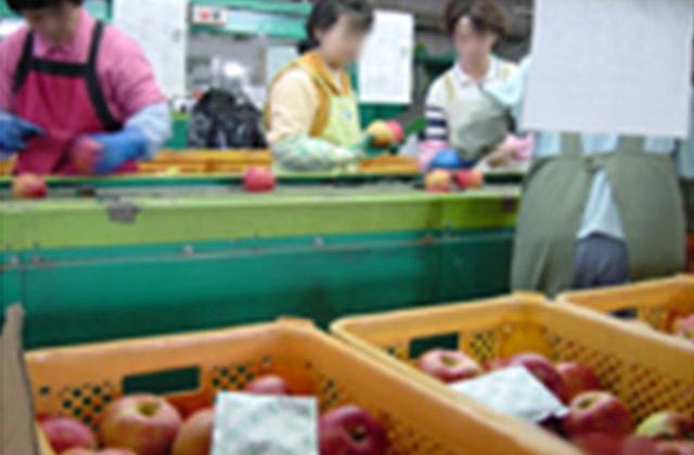 農業協同組合、経済連、生産組合|鮮度保持剤 三愛エチレン・コントロール